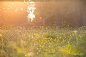 Warm summer evening by Pamba