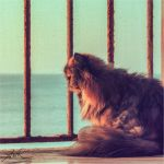 Akasha behind bars by klapouch
