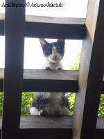 cat on the wooden battens by anemoneploy