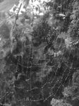 Raindrops and Spiderwebs by zeldalilly
