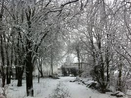 :Photo: Snow forest by IronMeow