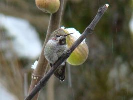 Hummer and Figs by docbevo