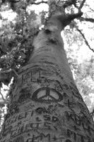 Carved Tree by peacetree7