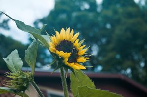 2015-07-03 Nature 03 by skydancer-stock