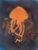 Jellyfish by TITO102