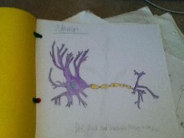 N is for neuron by KeepingPokemonEpic