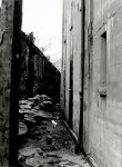 Cat in Alley by toastyplease