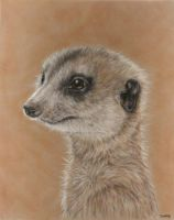 Meerkat by SavageArt