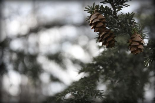 pine cone babies by EmpressComplexity