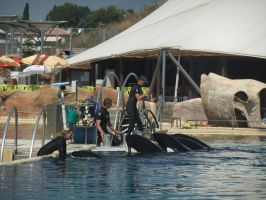 The Marineland Antibes Pod by OrcaAmy