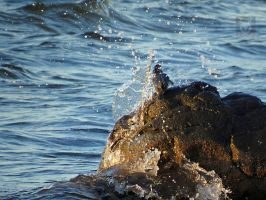 A Wave Against A Kingfisher by wolfwings1