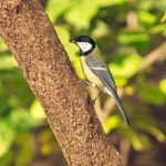 A tit by starykocur