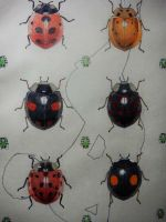 ladybug-collection by HiromichiMusha