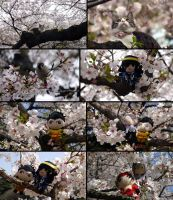 photo: fun time during hanami by MasamuneRevolution