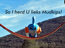 Mudkip on swing by Utack101
