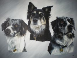 Missy, Jess and Blue by petportraitman