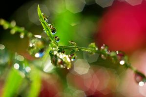 Magic Macro World by SmileyG