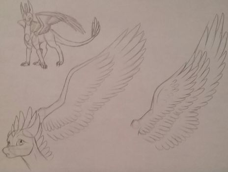 Starlet/Wing Sketches by VDragon-Creations