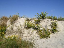 Plants on the Dunes by RustyFanatic05