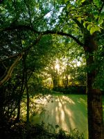 River through the trees by davepphotographer
