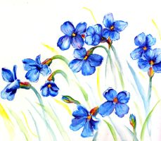 little blue flowers by sythesite