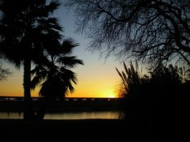 A Perfect Palm Sunset by Marilyn958