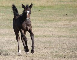 Seven Foal Stock2 by blaisedrew62
