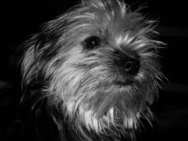 Dog Black and white by Fabharty