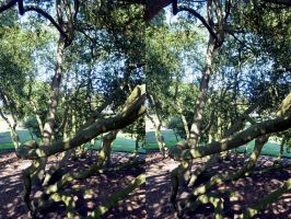 The Heathfield Box Grove Cross Eye View Stereo by aegiandyad