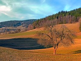 Lonely tree in springtime scenery by patrickjobst