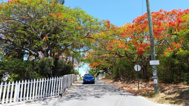 Poinciana-Hilltop-Fence by NativeStew