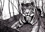 Tiger: Pen and Ink by Joey-Zero