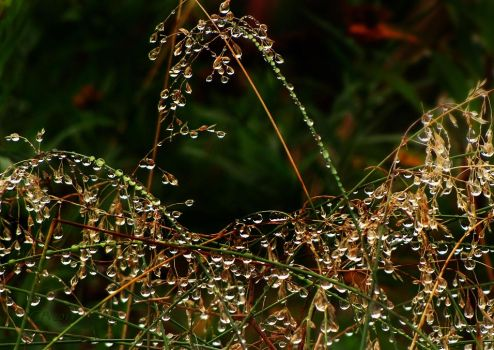 Suspended Raindrops by CanonSX20