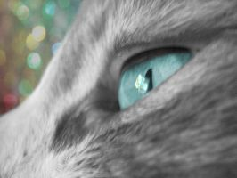 eye of a cat by marmarlaid