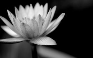 Black and White-5 by rsaravanan