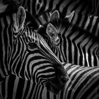 Black or White by tholang