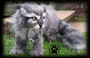 SOLD Alkali the granite lynx cub poseable artdoll! by CreaturesofNat