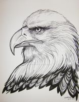 Bald Eagle Pen and Ink by HouseofChabrier
