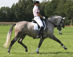 Dressage stock 7 by ByMelody