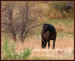 Pryor Mustang by neaters2000