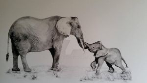 Elephants by Fitzyart