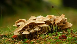 mushrooms in the grass by SvitakovaEva