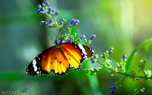Butterfly .moth by SaRaB-2