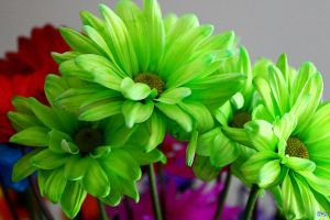 Birthday Flowers 8 by LifeThroughALens84