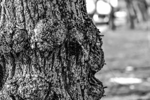 Knotted Tree by WickedOwl514