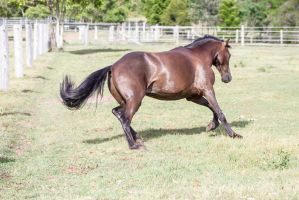 Dn canter side view by Chunga-Stock