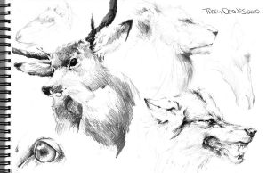 Life Drawing Study: Animals by t-deines