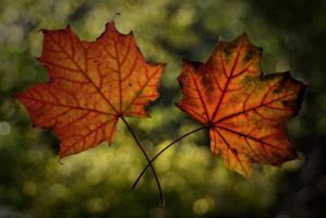 Leaves. by Morfins