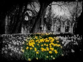 York in spring time 2009 . by velar1