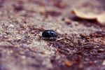 a beatle. by AleX-IshtaR